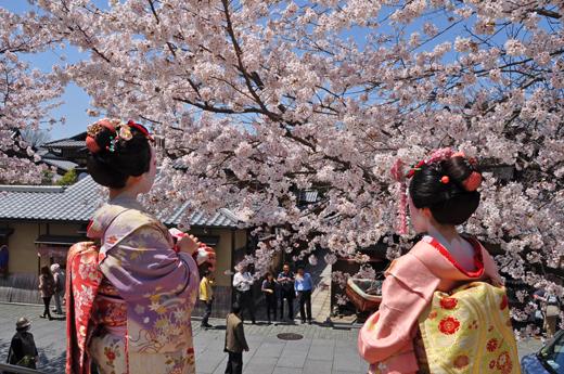 せっかく行くなら美味しくランチ!京都の人気ランチのお店5選のサムネイル画像