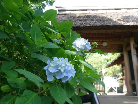北鎌倉のランチはブンガクの香りがする…鎌倉じゃない、北鎌倉だからのサムネイル画像