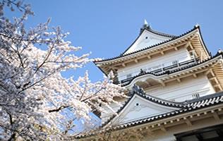 小田原城を見学したあとは、人気のグルメを楽しみませんか?のサムネイル画像
