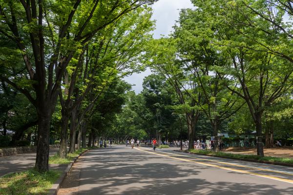 駒沢公園周辺おいしいラーメン店5選!ぜひ足を運んでみてください!のサムネイル画像