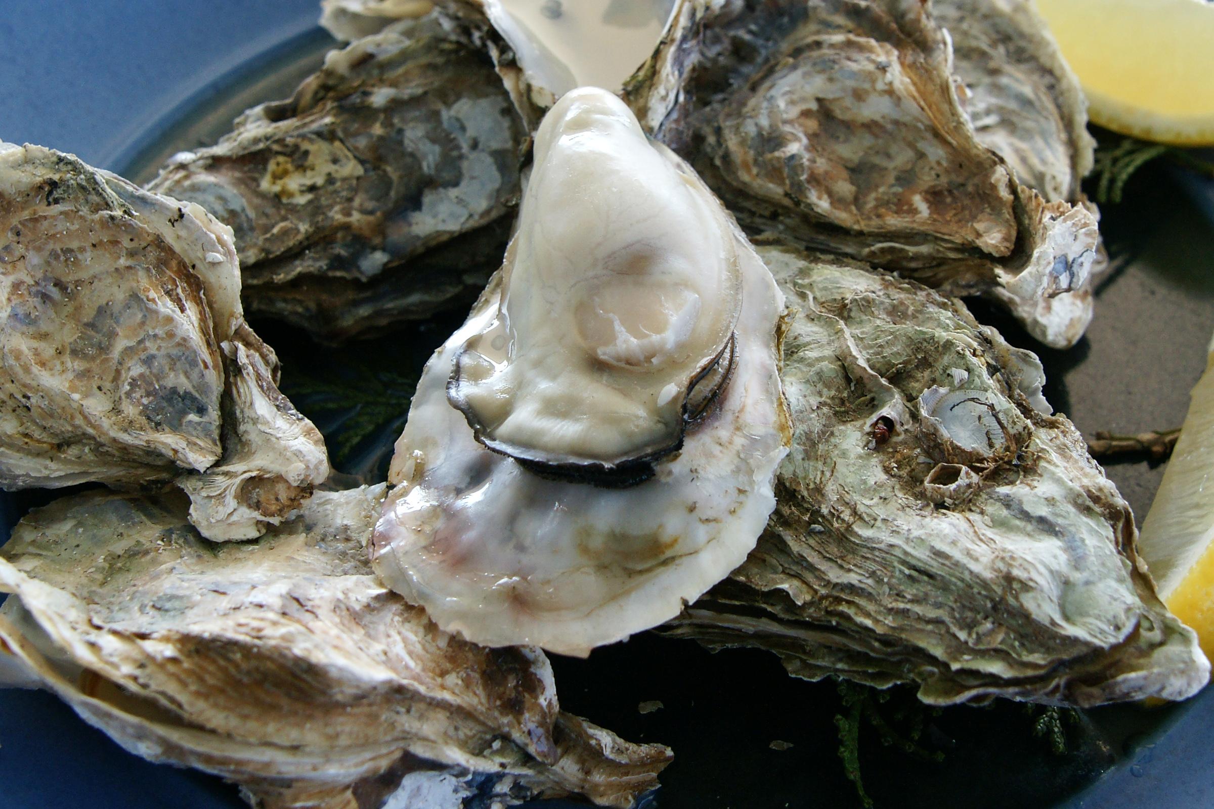 日本全国版!美味しい牡蠣を食べ尽くそう!牡蠣食べ放題の人気店のサムネイル画像